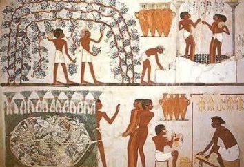 Co to jest podatek w starożytnym Egipcie? Historia podatki
