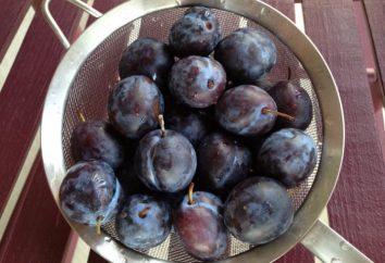 Cómo secar ciruelas en una secadora eléctrica? Blanks of plum – recetas