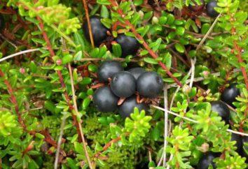 nero Crowberry: la coltivazione e la cura