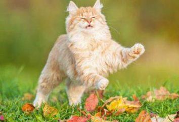¿Es posible dar a la valeriana gatos, cuando camina, y el número de gotas?