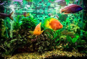 La pompe pour l'aquarium: le but et les espèces