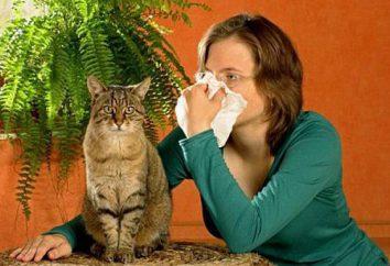 Są uczuleni na sierść zwierzęca: objawy i leczenie. Uczulone na koty: objawy u dorosłych