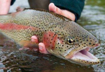 I tipi più comuni di pesci rossi