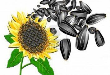 Les avantages des graines de tournesol et combien de calories dans les graines