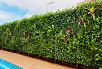 jardins verticais (foto). Como fazer um jardim vertical com suas próprias mãos?