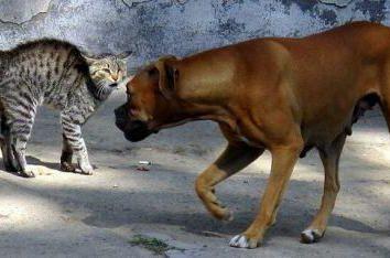 Dlaczego psy nie lubią kotów?