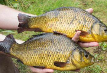 Pflanzen fressende Fische: der Name, vor allem der Anbau und Versorgung. Fischfarm