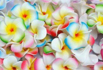 Nous développons de nouveaux types de travaux d'aiguille. Comment faire des fleurs de foamirana?