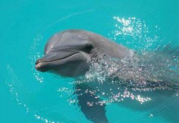 Pływanie z delfinami – rozrywka lub metoda psychoterapii?