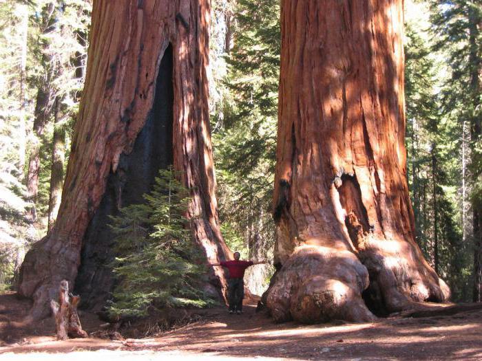 déterminer age arbre