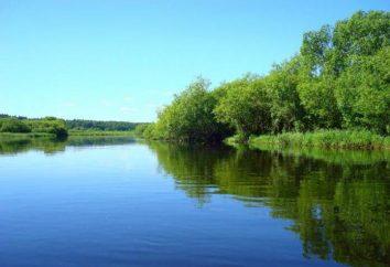 Berezina (río): descripción e historia. Río Berezina en el mapa