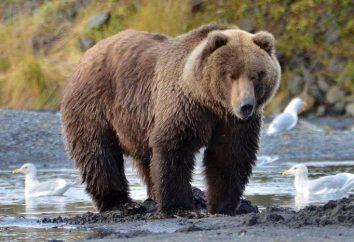 Najcięższe zwierzę na świecie. Jak zważyć płetwal błękitny, słoń i hipopotam