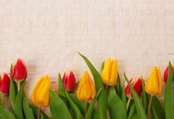Interpretazione dei sogni: tulipano. Perché il sogno di un tulipano rosso?