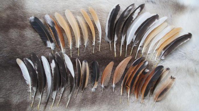 Plumes d 39 oiseaux types caract ristiques structurelles - Signification des plumes d oiseaux ...