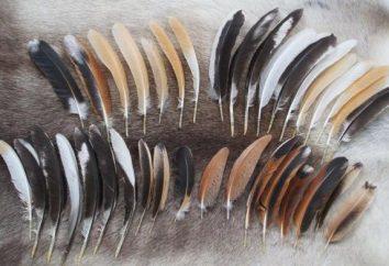 Pióra ptaków: rodzaje, cechy strukturalne