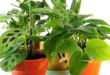 Comment prendre soin de plantes d'intérieur? Comment prendre soin des plantes d'intérieur en hiver?