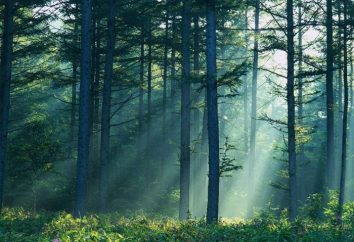 Cieszący książkę wymarzony: las