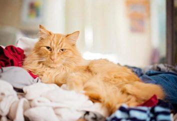 ¿Por qué una mierda de gato en la cama: causas y soluciones. Cómo criar a un gato