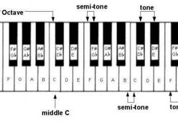 Qual è la gamma? Nomi delle specie bilance. scale Tabella