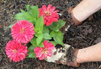 Floricultura – é elegante e bonito. jardinagem paisagem