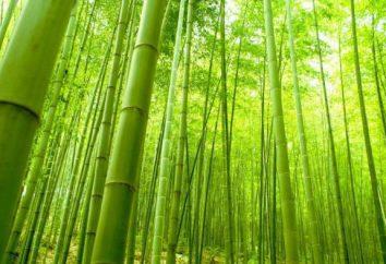Fibra di bambù: che cosa è, i pro ei contro dei prodotti di bambù