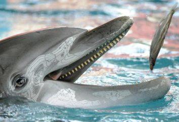 Que mangent les dauphins, quel est leur traitement préféré?