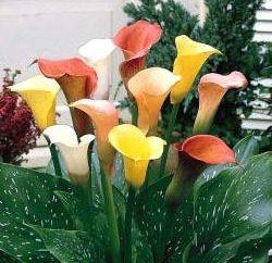 Copo de jardinagem (plantação e manutenção)