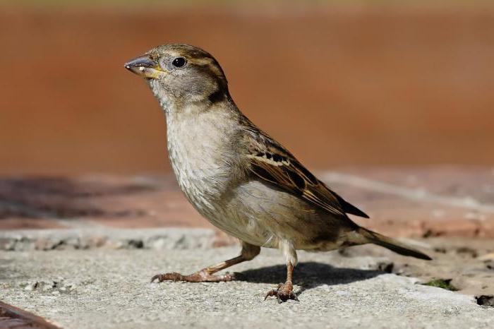 vögel der welt
