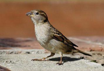 Rosyjskie przysłowia o ptakach: owłosione świat oczami naszych przodków