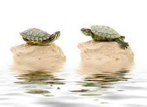 I gdzie żółw żyje?