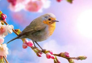 Cómo primavera hermosa naturaleza