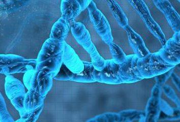 Organizacja chemiczny komórek: substancje organiczne, makro- i mikroskładników