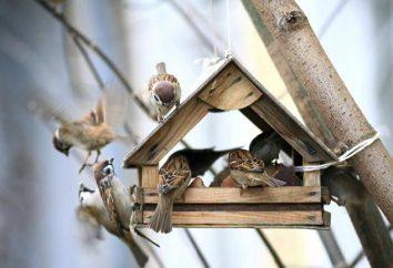 Jak pomóc ptakom w zimie? Uczymy!