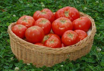 Nawóz do pomidorów: jakie są i jak spędzają karmienia