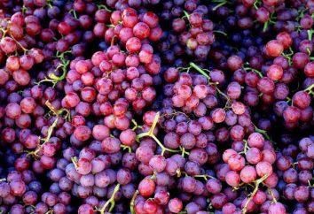 Kruszarki do winogron odmian i specyfikacji: