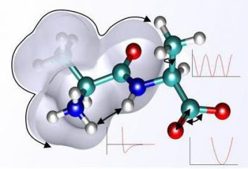Funkcja energii białka: przykładów i opisów. Jakie są białka i gdzie przeprowadzić funkcję energetyczną?
