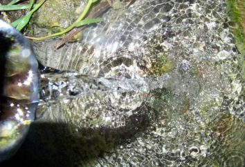 L'acqua – fonte di vita sulla Terra