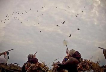 Skradke für eine Ente zu jagen. Entenkoje. Jagdlich Ente