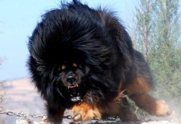 Nos animaux préférés. races de chiens rares