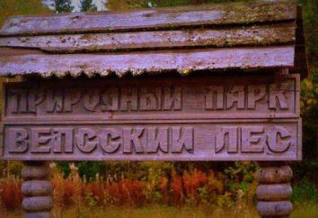 Região de Leninegrado: atrações, características e fatos interessantes