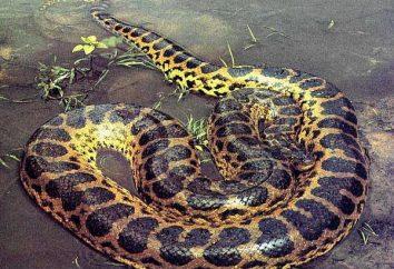 Est-ce anaconda dangereux?