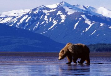 Venta de Alaska, 1867. ¿Quién manda en Rusia en el momento y que tomó la decisión de vender la península?