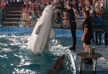 Dolphinarium em Chelyabinsk – um fim de semana divertido para toda a família