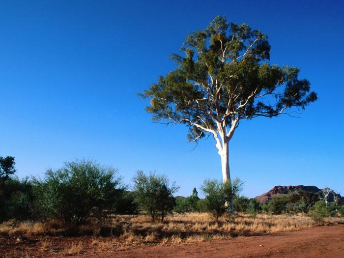 physikalische verwitterung in wüsten