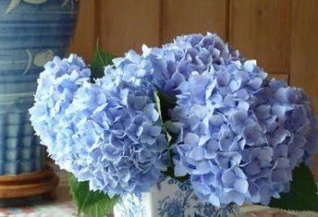 Hortensja z foamirana: klasy mistrzowskiej na dokonanie kwiat