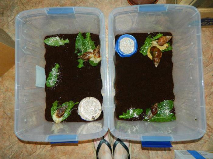 Come scegliere un terrario per le lumache suggerimenti for Contenitore per tartarughe