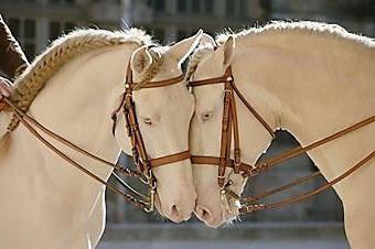 Isabella kolor konia jest rzadkością