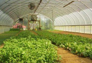 Automatisation des serres. Arrosage et ventilation des plantes