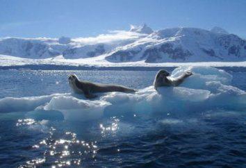 Organiczna świat Oceanu Arktycznego (krótko)