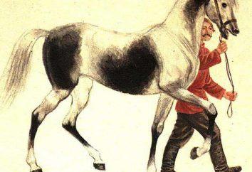 "Tolstoi, ""caballo viejo"": Resumen"